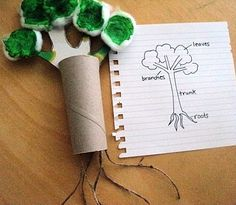 Earth day tree craft:  cardboard TP tube, cardboard branches, cotton balls, twine, watered down green food coloring