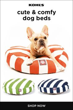 Keep your fur babies comfortable with dog beds that complement your decorative style. The round shape of these striped beds is perfect for smaller dogs and puppies, but we've got plenty more styles no matter the size your four-legged friend! Find the dog Cute Baby Animals, Animals And Pets, Funny Animals, Cute Puppies, Dogs And Puppies, Teacup Puppies, Dachshund Puppies, Beagle Puppy, Terrier Puppies