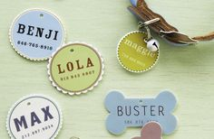 Write on shrinky-Dinks, and attach to your dogs collar!     http://planetgreen.discovery.com/home-garden/weeks-diy-garden-solar.html