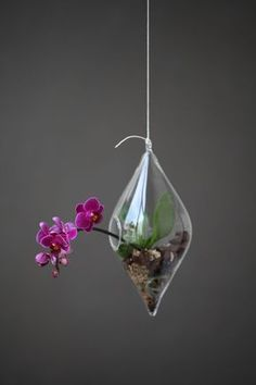 orchid in hanging terrarium More