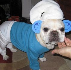 smurf outfit for dog - Google zoeken