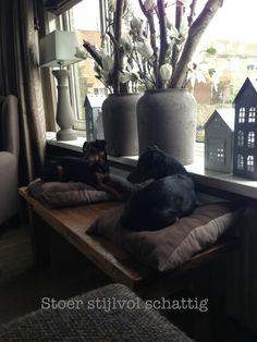 Woonkamer..onze 2 hondjes Macho en Diva