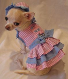 Chihuahua Clothes - Doggie Clothesline http://www.doggieclothesline.com/