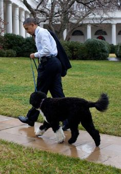 Barack Obama et son chien #chien - verlina.com