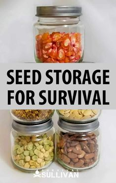 How to store seeds for survival and homesteading purposes. Make sure you'll always have a garden to feed you no matter what the future brings. Emergency Preparedness Food, Emergency Preparation, Survival Food, Survival Skills, Emergency Kits, Survival Hacks, Emergency Supplies, Survival Stuff, Urban Survival