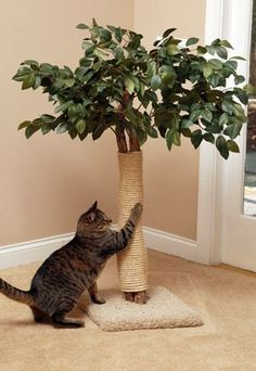 Cat Care Kittens Lifelike Cat Scratching Tree - CatspotLuxury Cat Tree - Round Base (Cat Trees): Cat Resort is a beautifully designed replica tree that will bring fun, exercise, relaxation and comfort to your indoor cat. Diy Cat Toys, Cool Cat Trees, Cool Cats, Cat Trees Diy Easy, Cat Scratching Tree, Diy Cat Scratching Post, Gatos Cool, Photo Chat, Cat Room