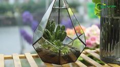 geometric  terrariums Glass Terrarium, Terrariums, Planter Ideas, Ceramic Planters, Floating Frame, Plant Holders, Artificial Plants, Garden Planters, Air Plants
