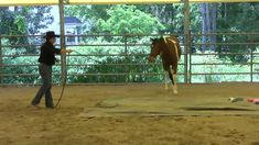 Day 8 - SCEA Rescue Horse - Desensitizing and walking over tarps.