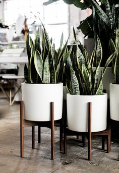 Modernica Planter - White ceramic cylinder with walnut stand available at shopPigment.com