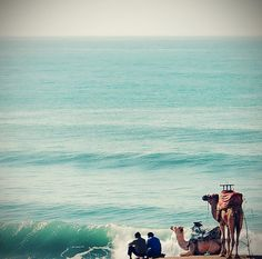 camel....to the sea