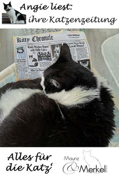 Immer uptodate mit unserer Katzenzeitung! Zeitungsartikel von Katzen für Katzen in der Weltsprache Englisch. Artikel aus allen Rubriken, von Nachrichten über Gesellschaft, Kultur und Kulinarisches, bis Wirtschaft, Sport und Wetter.  All unsere Zeitungsseiten sind mit Katzenminze gefüllt und haben innen eine Knisterfolie. Die Rückseiten bestehen aus festem Baumwollstoff in schwarz/weiß.  Ein witziges und originelles Katzenspielzeug, als Geschenk auch immer ein Lacher beim Katzenpersonal. Batman, Superhero, Sport, Cats, Animals, Fictional Characters, Cotton Fabric, Economics, English