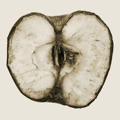 admiredphotographers:  mizisham:Rotting Apple Half (sepia) by Craig Jewell Photography on Flickr.