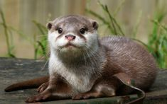 Little Otter Will Pose for a Portrait - August 21, 2011