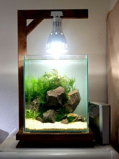 Nano aquarium - Very Clean looking . home made set up Aquascaping, Aquarium Aquascape, Diy Aquarium, Nature Aquarium, Aquarium Lighting, Aquarium Design, Planted Aquarium, Indoor Water Garden, Indoor Pond