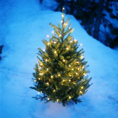 Groovy Lights Snow House Tree Snow Trees Lights Structures Easy Diy Christmas Decorations Tissureus