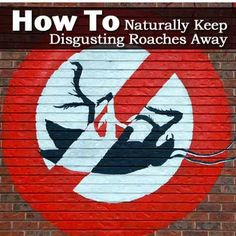 How To Naturally Keep Disgusting Roaches Away