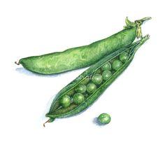 Peas in pod by Liz Pepperell