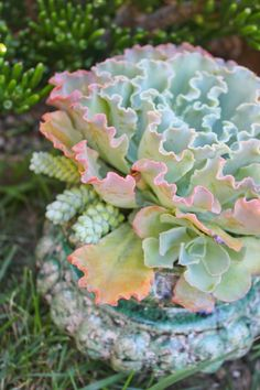 Succulent Art of Carol Booth.  Photo by Laguna Dirt.