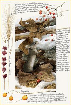 Petite Souris (c) Marjolein Bastin Marjolein Bastin, Nature Sketch, Nature Artists, Beatrix Potter, Dutch Artists, Wildlife Art, Pics Art, Children's Book Illustration, Illustrators