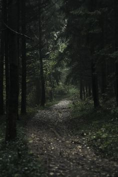 Walking alone on a road in a dark forest