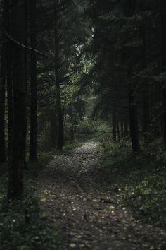 dark forest@ http://pinterest.com/goyakhla/boards/