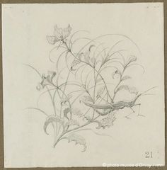E.GALLÉ__ 1881_DrawingsForPlate_Orsay_6.gif