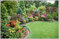 Beautiful border of mixed evergreens, hedging plants and perennials