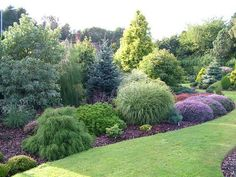 FOXHOLLOW GARDEN - colourful conifer gems