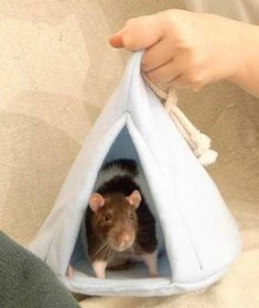 Fliegewigwam, A hanging Wigwam. She looks just like my Pepper ❤️ Pet Rat Cages, Pet Cage, Guinea Pig Toys, Guinea Pigs, Animals And Pets, Cute Animals, Strange Animals, Rat Cage Accessories, Rat Hammock