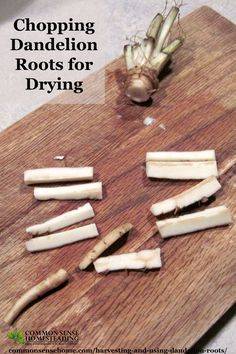 Harvesting and Using Dandelion Roots - Learn about the best time to dig dandelion roots, preserving dandelion roots, and dandelion root home remedies.