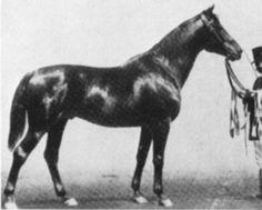 East-Prussian stallion Optimus (b. 1880)