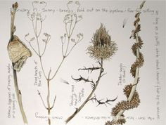 Middlewood Journal: Mantis Case, Blue Curls, Thistle, Dodder
