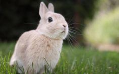 Free screensaver bunny picture, Gray Sheldon 2016-06-04