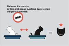 http://katzentipps.ch/tipp-katzenklos-mit-abstand-aufstellen/