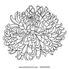 Hand drawn Chrysanthemum for tattoo design