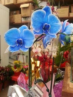Orchidea! The blue one! Wonderful!