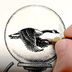 Goose scratch board design / logo. #scratchboard Scratchboard Art, Great Logos, Logo Design Inspiration, Ski, Rings For Men, Bird, Water, Artwork, Gripe Water