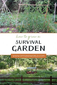 [REVEAL]=> If you are crazy in love with ultimate survival garden, it's totally understandable.Many of us struggle to finish simple tasks because we don't know this trick. Click on the picture to discover it now. It will be deleted by Friday this week
