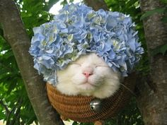 Cat Squinting with Absurd Things On His Head will Somehow Melt Your Heart - GIGAZINE