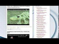 "16/11/16 13:18hs Boletín ""La Caracola"" D.I.M. - Diario de Información del Mar Aprocean Blog http://aprocean.blogspot.com.es/"