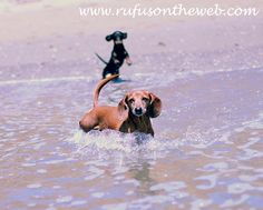 I can't get my weenies into the water...they avoid it at all cost!- so does ours