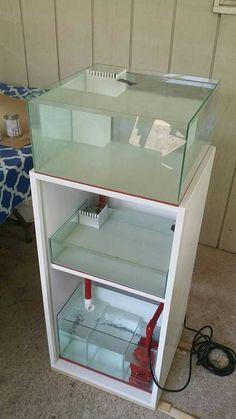 Diy Aquarium Filter, Diy Aquarium Stand, Aquarium Sump, Aquarium Systems, Nano Aquarium, Coral Reef Aquarium, Marine Aquarium, Saltwater Tank, Saltwater Aquarium