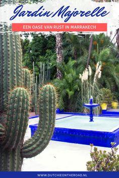 Jardin Majorelle Marrakech Marrakech, The Road, Beautiful Buildings, Lonely Planet, Cactus Plants, Morocco, World, Travel, Calm