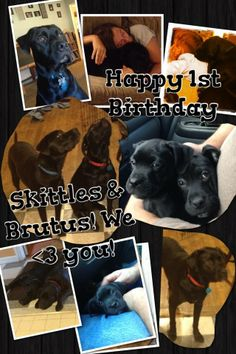 Skittles and Brutus, 1yo pit bulls that repeatedly escaped owner David and Beth Hupke's yard to attack people at a nearby park. In 2014, they've attacked a woman walking with her child, biting her on the wrist, and a cyclist, biting her on the shoulder. (Jan-April 2014, NJ) http://www.nj.com/ocean/index.ssf/2014/04/owner_charged_after_her_loose_dog_bites_nj_woman_on_bike_path.html