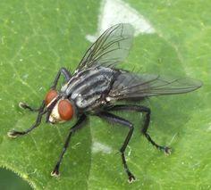 Vida en la granja:: Moscas Mosquitos, Bee, Insects, Animals, Farmhouse, Cartoon, Life, Honey Bees, Bees