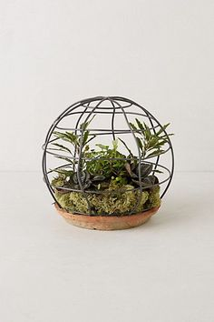 spherical trellis terrarium