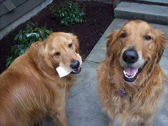 Grady & Buehrle!
