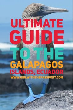 A guide for what to see and do when visiting the Galapagos Islands in Ecuador.