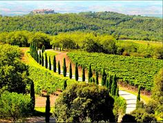8 of the most jaw-droppingly beautiful vineyards to visit in Tuscany | Boutique Travel Blog