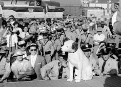 "Résultat de recherche d'images pour ""nipper and elvis mississippi alabama and dairy show 1956"""
